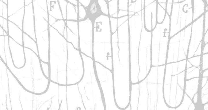 Pyramidal Cells Illustrated By Cajal