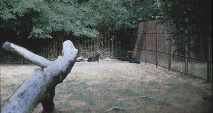 Ein Tierhaus voller Geschichten: Abschied von Karin Jacobi ...