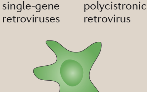 Integrating_Viruses