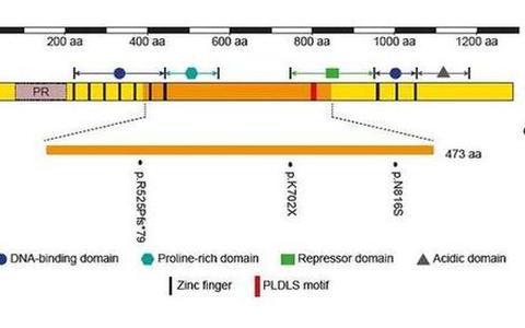 Fig 3. Mutations reside within the genomic sequence of exon 9 of PRDM16 in patients with LVNC