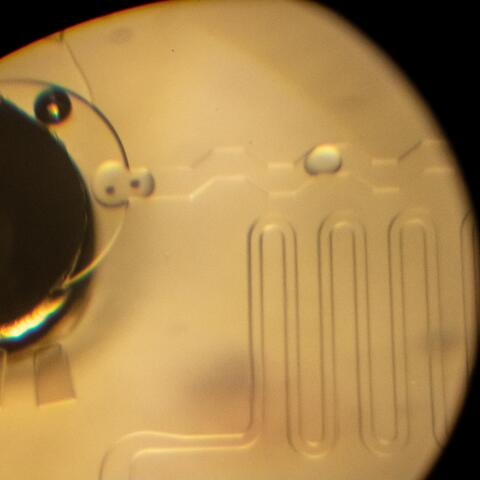 Einzelzellanalyse: Codierte Zellproben während ihres Transports in winzigen Tröpfchen.