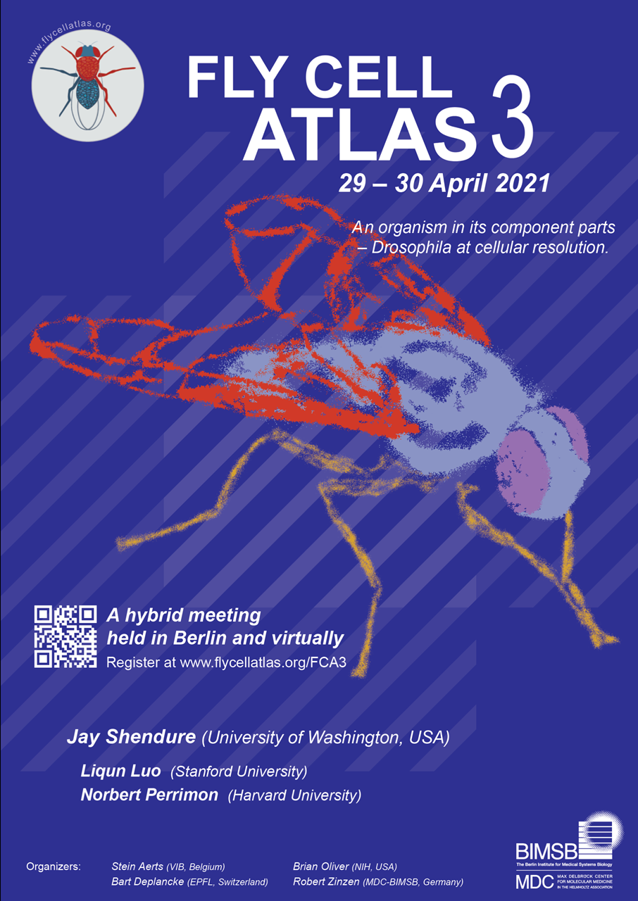 Fly Cell Atlas Poster