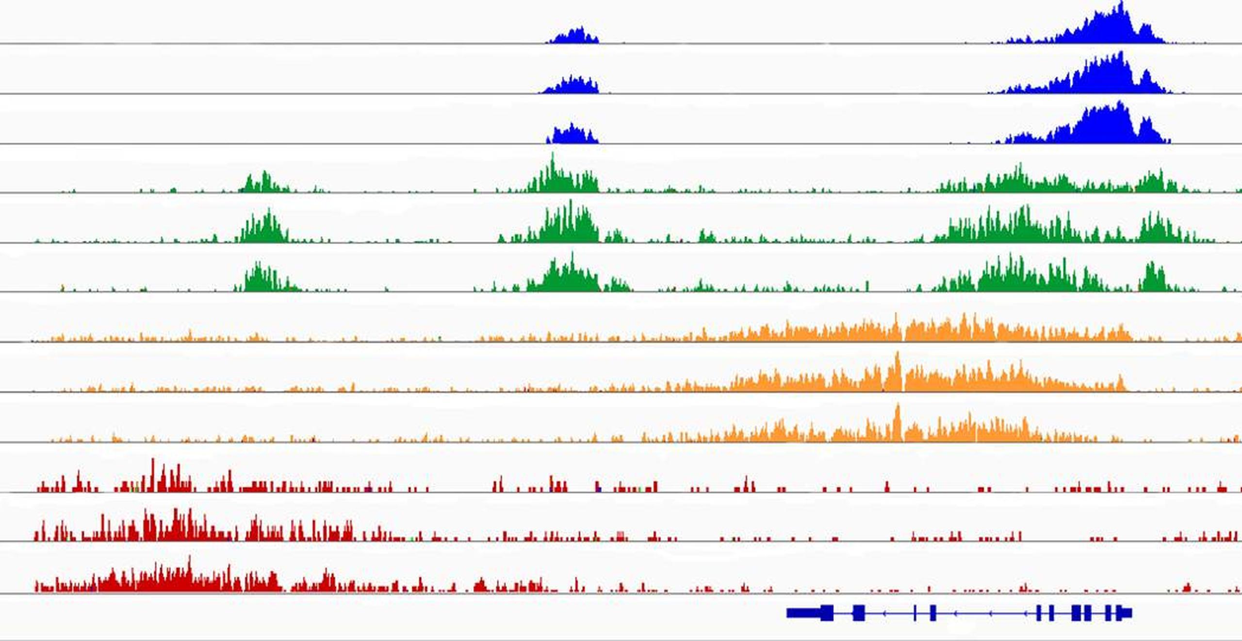 Wie Umwelt und Genetik unsere Erbanlagen beeinflussen | Max-Delbrück ...