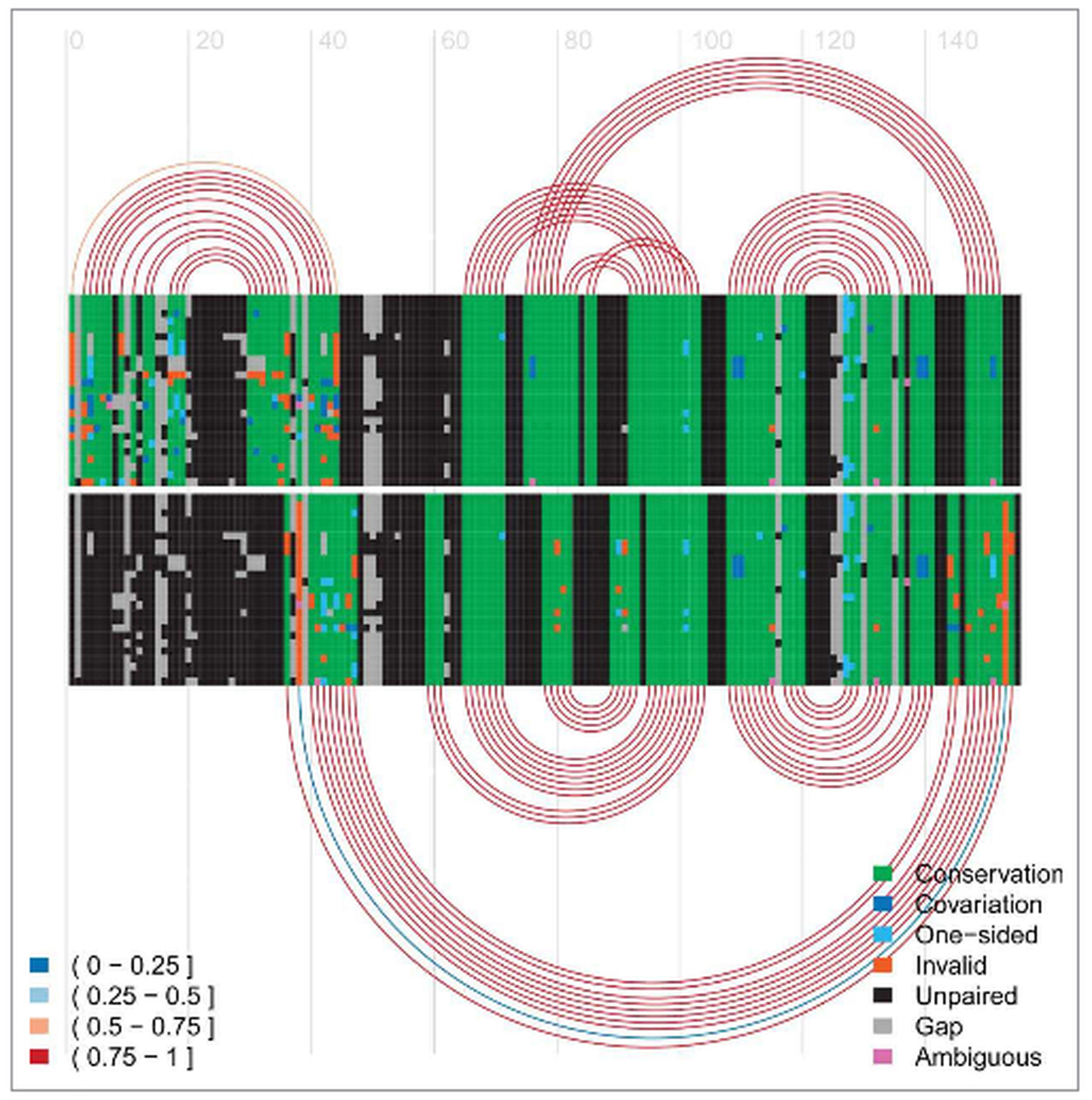 6ee28d1a7be8d Figure 1  Arc-plot for the HDV ribozyme made using R-Chie. Each arc  represents one pair of base-paired alignment columns. Arcs and the  alignment at the top ...