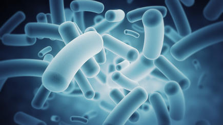 Bacteria in the human microbiome