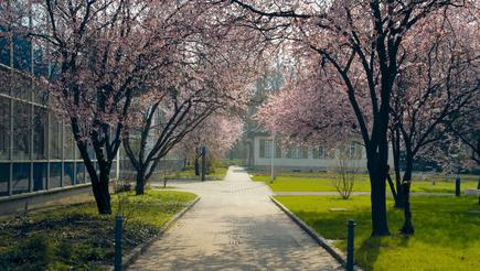 Library in spring: Blooming trees